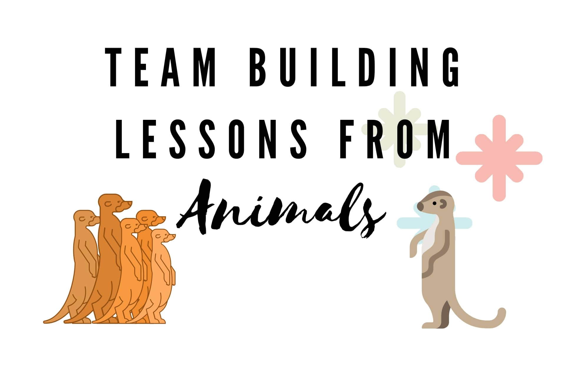 7 Team Building Lessons We Can Learn From Animals